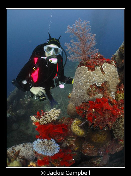 Diver with coral on one of the wrecks in Truk Lagoon. Ca... by Jackie Campbell