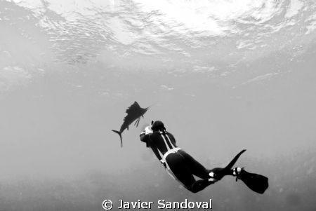 Isla Mujeres Sailfish run by Javier Sandoval