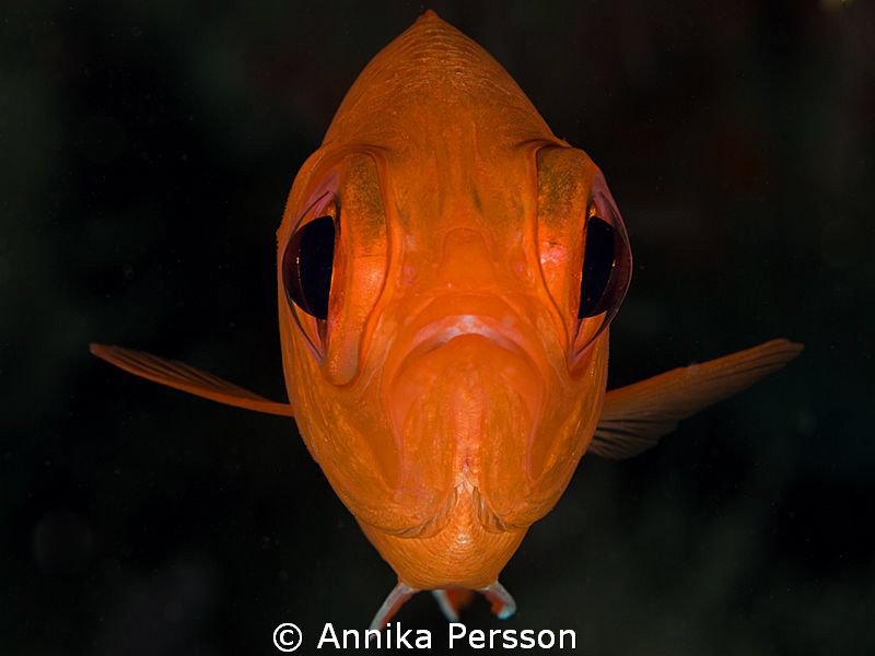 The face of this red fish reminds me of an Alian from spa... by Annika Persson