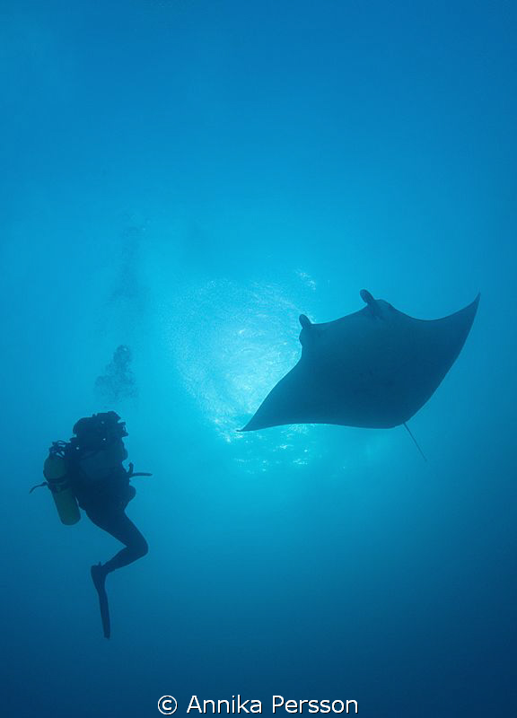 Diver meets manta by Annika Persson