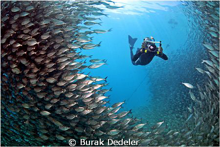 A window in the fish wall by Burak Dedeler