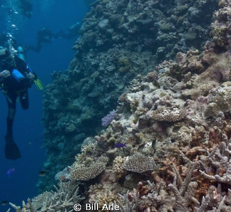Diving along the wall in the Coral Sea. by Bill Arle