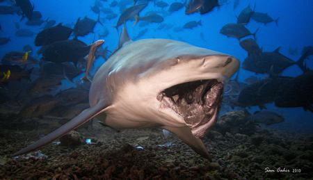Heads or tails?. The last days dive of 2010 and this fema... by Sam Cahir