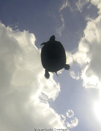 Turtle in the Sky by Jean-Louis Courteau