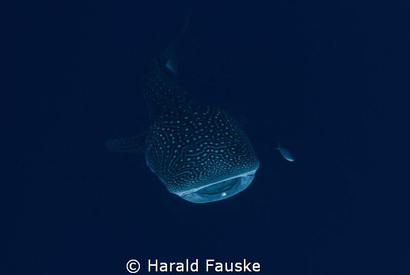 Picture taken in Sogod Bay, philippines. by Harald Fauske