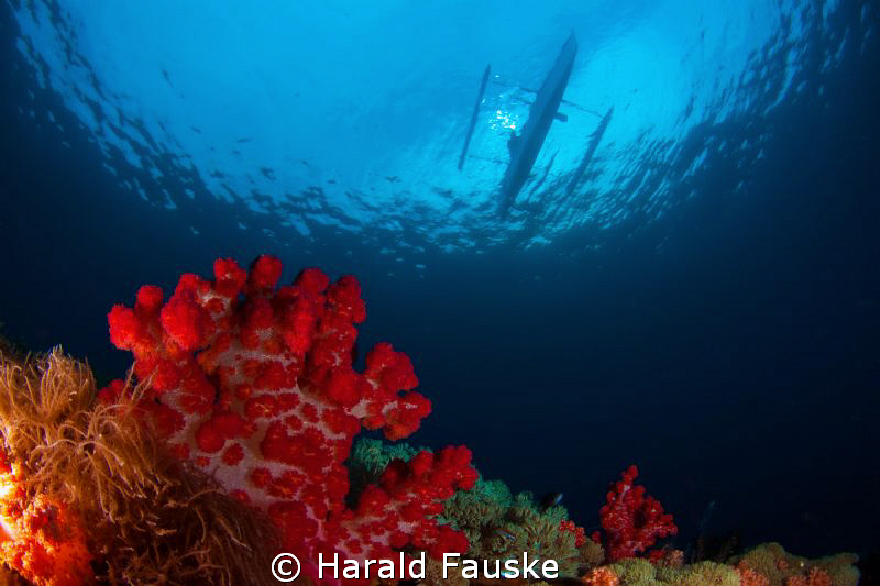 On the end of the dive, this outrigger appeared on the su... by Harald Fauske