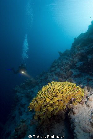 Salad coral with diver, outside Blue Hole, Dahab. Canon E... by Tobias Reitmayr