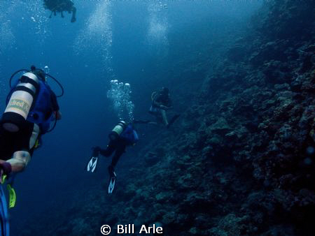 Divers along the wall at Osprey Reef, Coral Sea. by Bill Arle