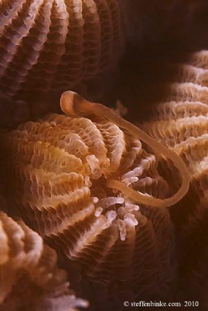 Night before Coral Spawning by Steffen Binke