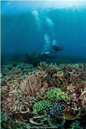 reef top , Pantar island, alor archipelago. by Gilles Brignardello