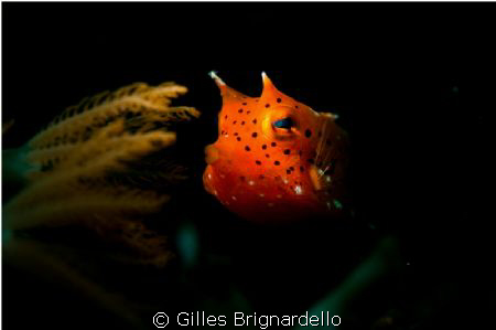 my first try with a snoot, luky this guy was not moving m... by Gilles Brignardello