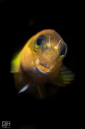 Hey cheeky face! D300s, Nauticam, 60mm by Debi Henshaw