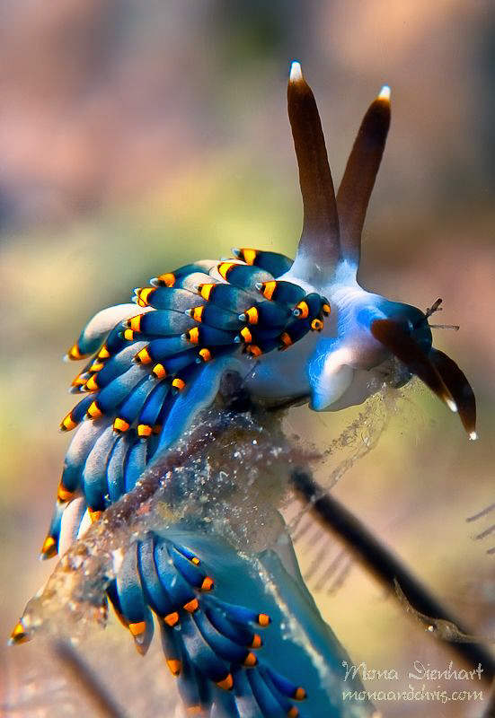 nice little nudi posing for me  in Bohol by Mona Dienhart