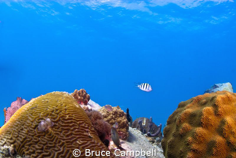 Swimming between two coral heads on turtle reef in Grand ... by Bruce Campbell