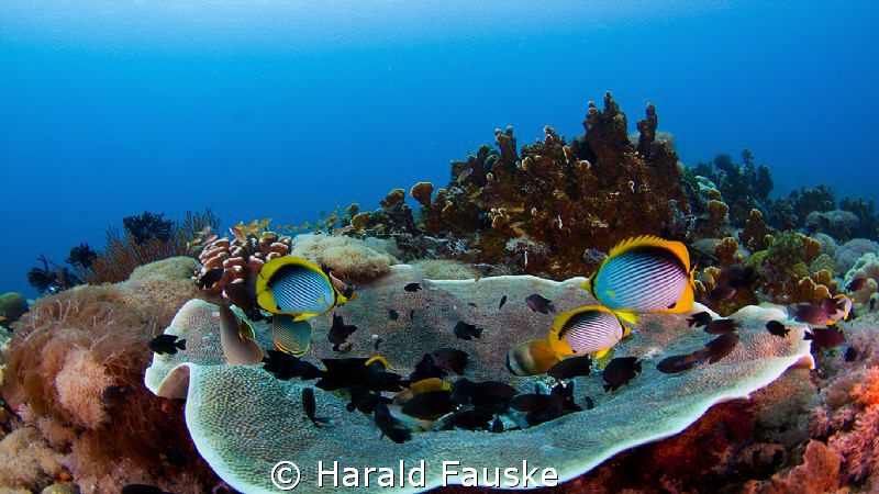 Napantau sanctuary, Phillipines, a lovely place to dive by Harald Fauske