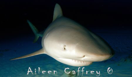 Ready for my close up Mr deMille... Bull Shark, Quintana Roo by Aileen Caffrey
