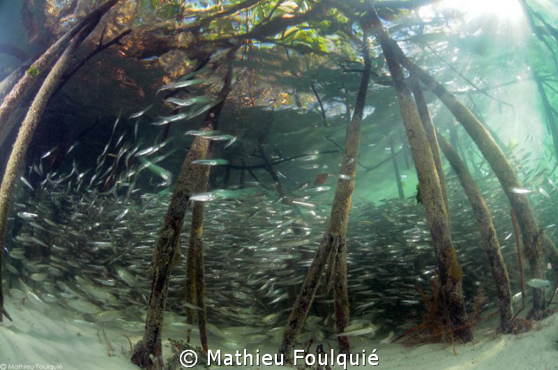 Mangrove_Los Roques National Park by Mathieu Foulquié