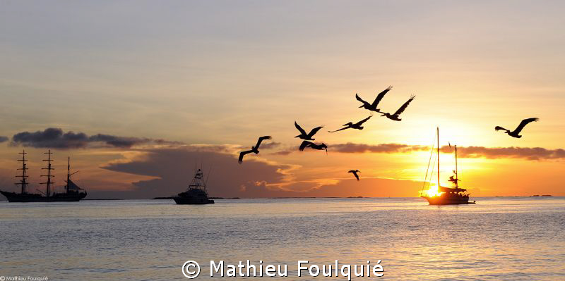Pelicans at the sunset_Los Roques by Mathieu Foulquié