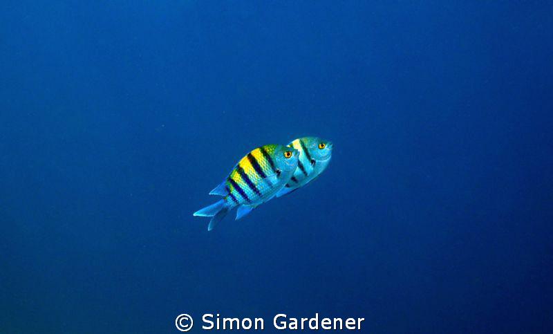 into the blue by Simon Gardener