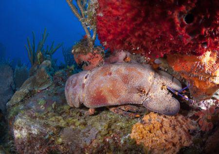 Spanish Lobster. by Juan Torres