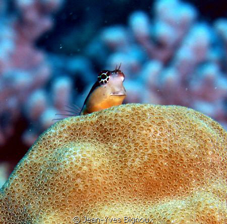 THE LITTLE GUY IN THE INDIAN OCEAN....this shot took time... by Jean-Yves Bignoux