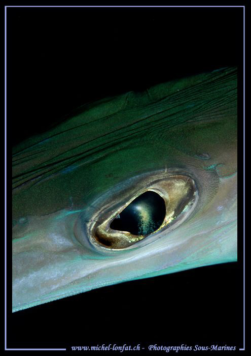 The Eye.... Night dive in Marsa Shagra... (for my good fr... by Michel Lonfat 