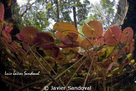 Grand Cenote near Tulum Mexico by Javier Sandoval