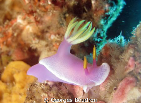 beauty on the reef at  Bunaken by Georges Boudron 