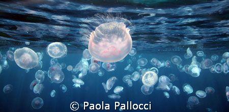 Jellyfish at sunset by Paola Pallocci