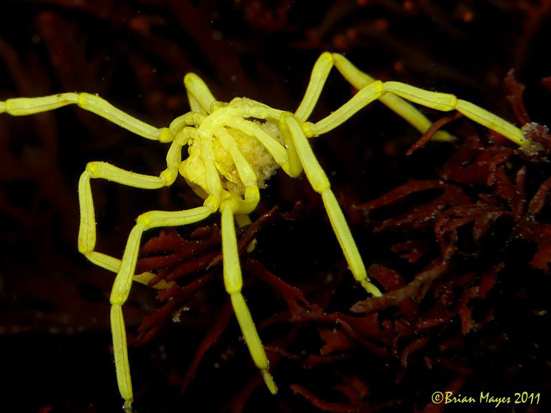 Warning! Arachnophobics should look away now. by Brian Mayes