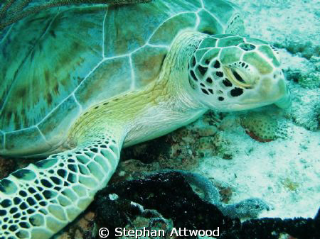 Turtle on Turtle reef - funny old thing that :-) !!!! by Stephan Attwood