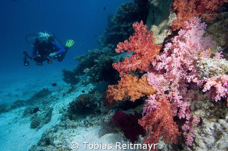 On the hunt at Umma Gamar, Hurghada. Canon EOS 350d, 10-2... by Tobias Reitmayr