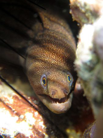 Nice eel in the shadow... by Durand Gerald