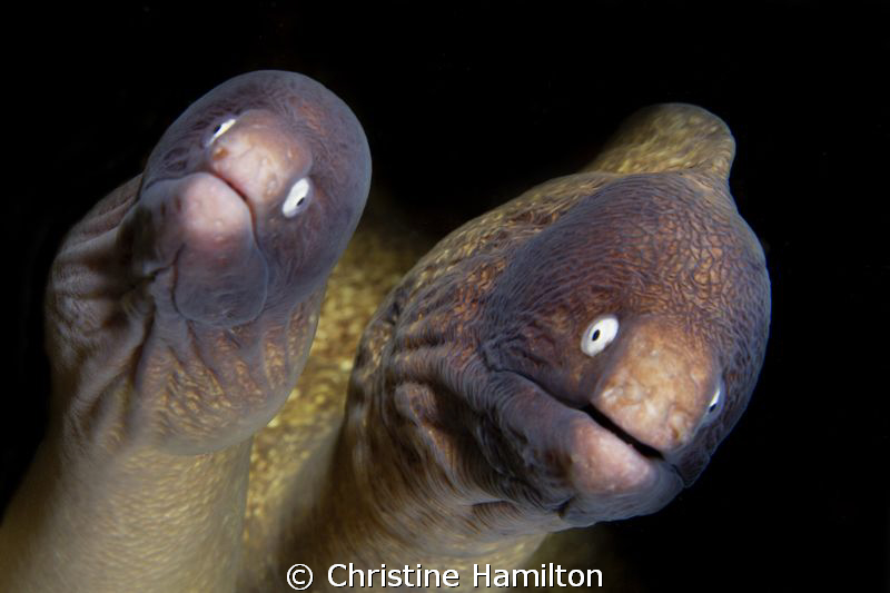 Mr & Mrs Moray by Christine Hamilton