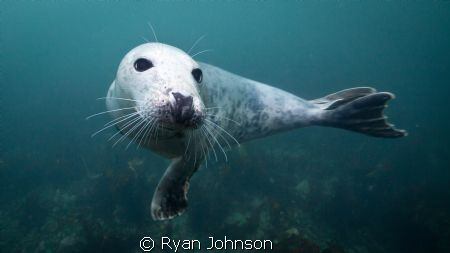 A seal at the Farne Islands in the North sea, just off th... by Ryan Johnson
