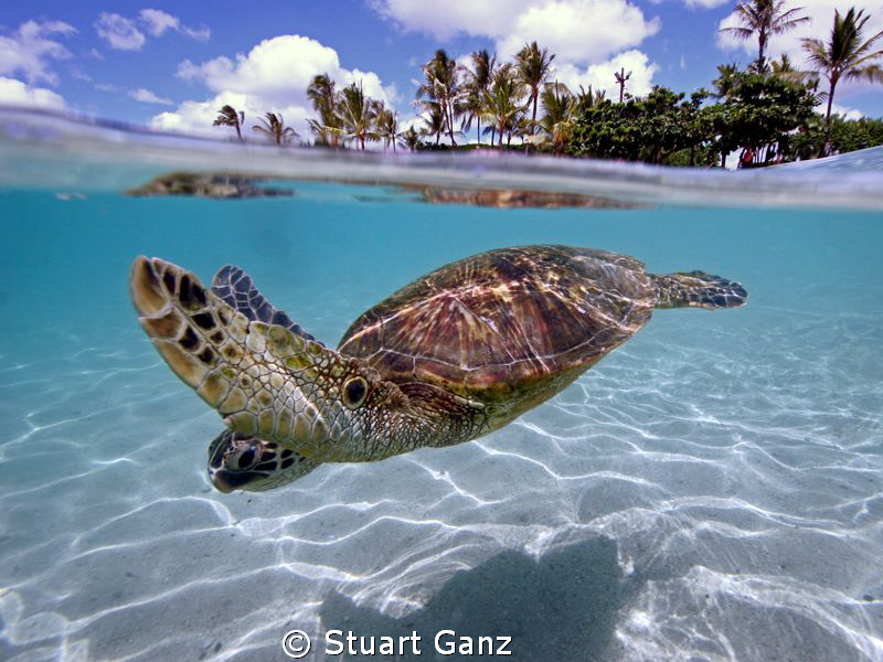 Turtle over/under, taken with Canon 20D W/10-22 MM lens i... by Stuart Ganz