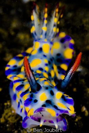 Nudibranch by Ben Joubert 