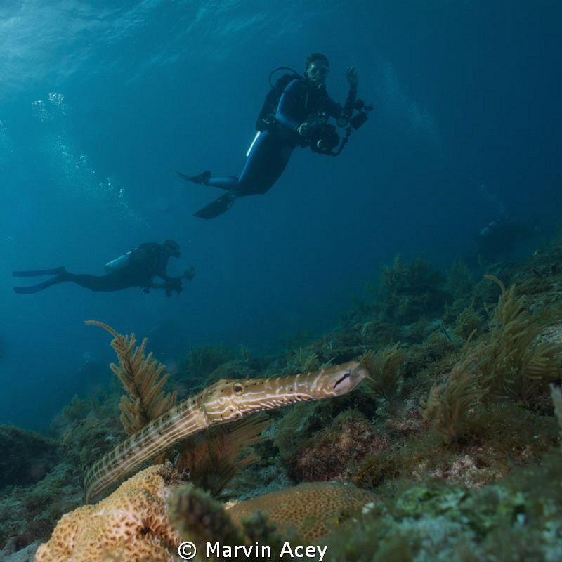 Cornet fish using a wide and Sony NEX5 during a photo cla... by Marvin Acey