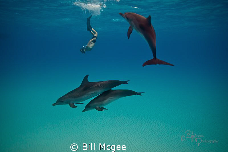 Snorkeling wtih Dolphin by Bill Mcgee