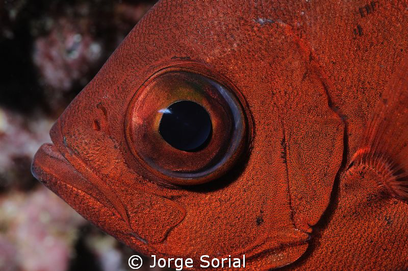The eye by Jorge Sorial
