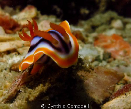 Little nudi fighting the current! 
