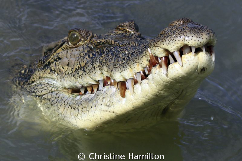 My...What Big Teeth You Have!!! by Christine Hamilton