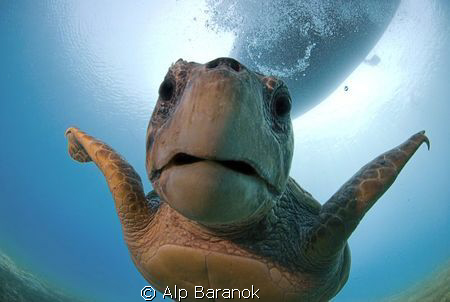 Caretta caretta from Kaş/Turkiye. Taken with Nikon 10,5mm... by Alp Baranok