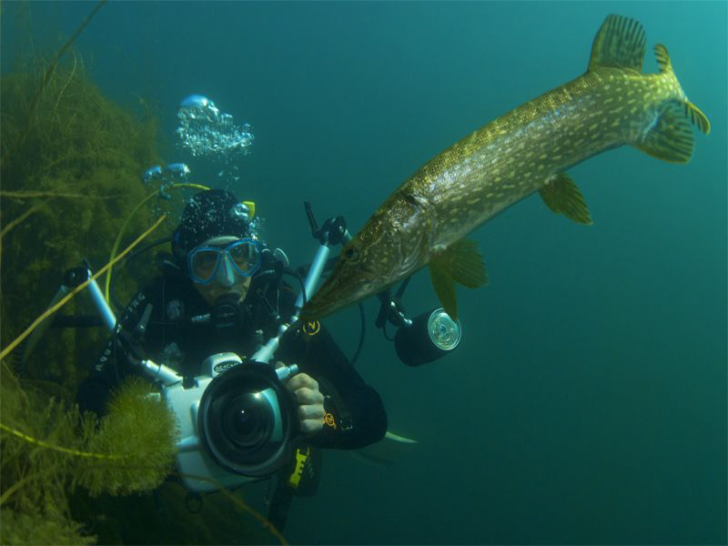 Mitch and THE pike, very nice dive & great w-end! by Sven Tramaux