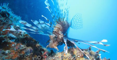 Lionfish was on the wreck. I used torch for lighting.