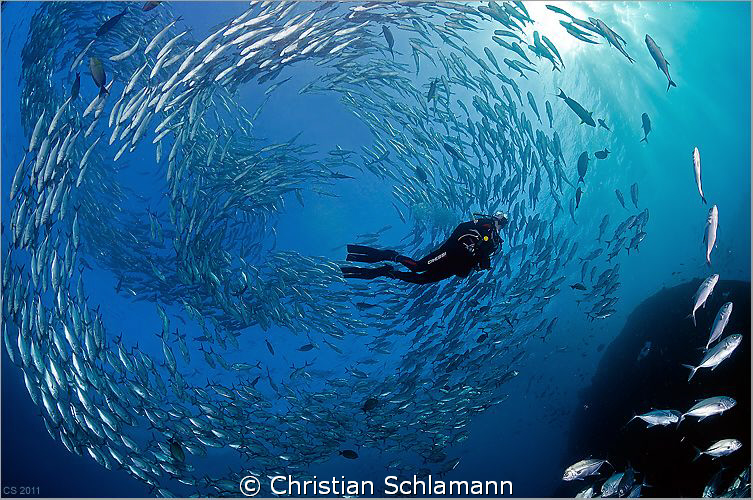 A swarm around a diver near the liberty-wreck in tulamben... by Christian Schlamann 