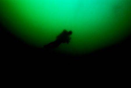 """""""A real pea souper"""" Sea&Sea NX 100 Nikon F100 Fuji Velv... by Gavin Skipp"""