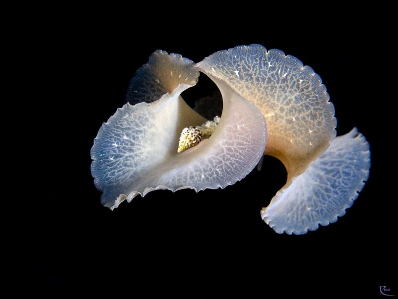 "Flatworm in ""free flight"" at night :-) by Rico Besserdich"