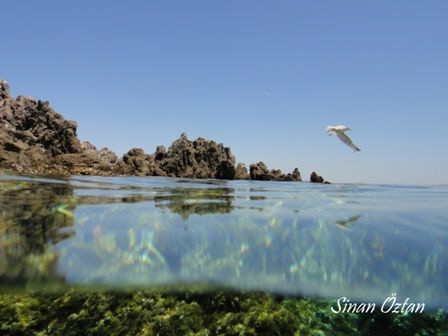 Actually that seagull supposed to wait me on the rock but... by Sinan Oztan