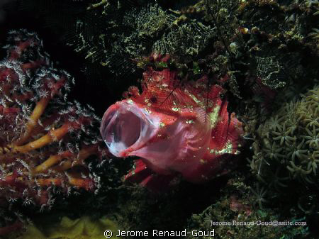 leaf fish with Canon G12 by Jerome Renaud-Goud